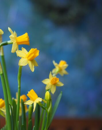 beautiful spring flowers at home on a dark background Banco de Imagens