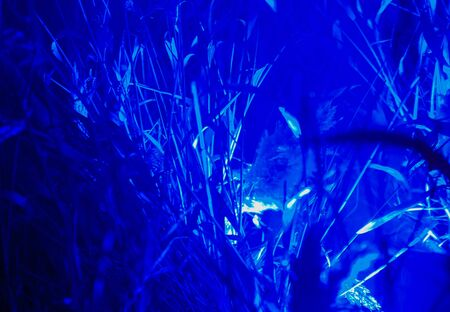 modern abstract trending blue background of neon plants