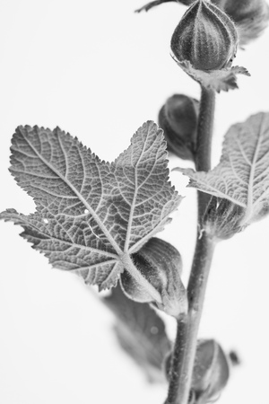 macrophoto: macrophoto of plant object with depth of field