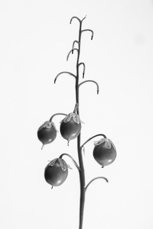 considerable: macrophoto of plant object with depth of field