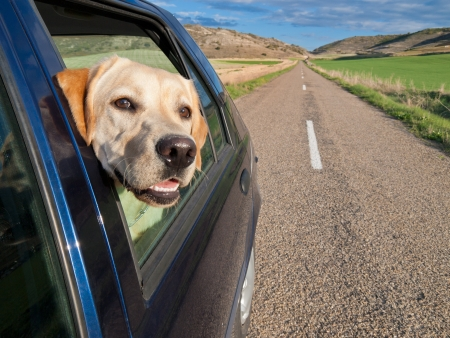 dog poking his head out the window of a car in a long road. Stock Photo