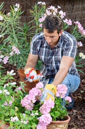 Young man pruning flowers in home garden photo