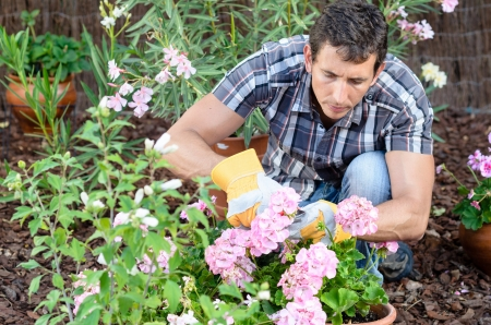 Young man pruning flowers in home garden Stock Photo