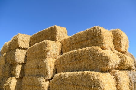 Haystack on blue sky in summer photo