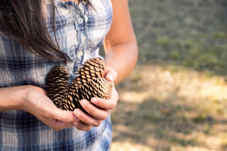 accumulating: Woman gathering pine cones. She is holding a group in her hands. Stock Photo