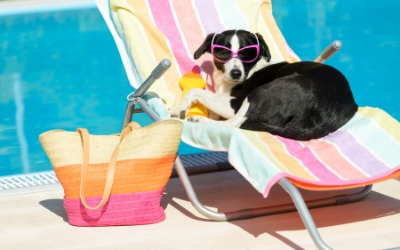 bask: Funny female dog sunbathing on summer vacation wearing sunglasses  Pet relaxing on a hammock at swimming pool