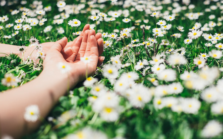 peacefulness: Relax and leisure concept  Woman relaxing lying on spring flowers and grass  Female hands and delicate daisies