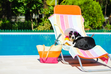 Funny dog resting on a deck chair and wearing sunglasses on summer vacation at swimming pool