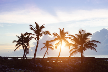 caribbean beach: Tropical scenic. Caribbean palm trees on sunset or morning.