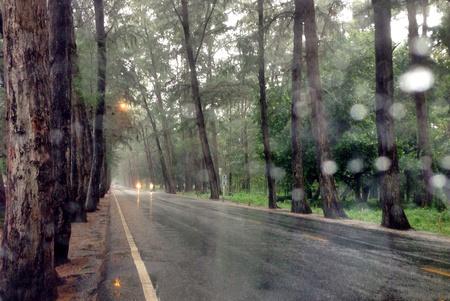 Slippery tree road Stock Photo