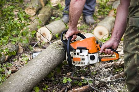Forestry workers with orange chainsaw  Stock Photo - 3094118