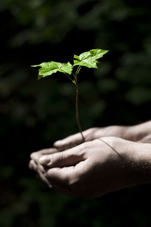 Life In Hands. New Life Concept. Focus On Leafs. Stock Photo - 3123303