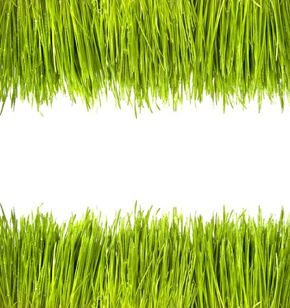 Green Grass with Water Drops photo