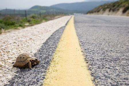 slow lane: Tortoise And Yellow Traffic Lane Markings Stock Photo