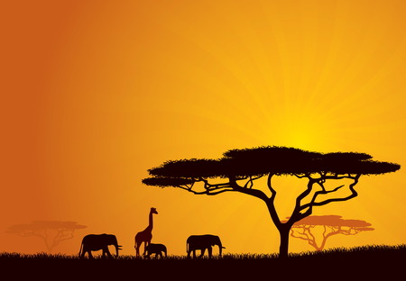 African Wildlife Background. Nature Background Series. Vector