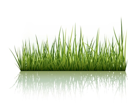 Green Grass Reflected On White Background Vector