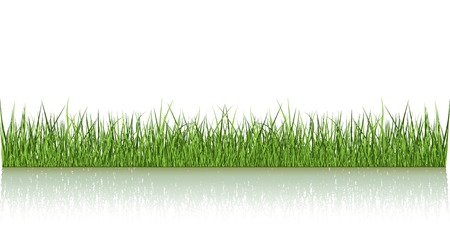 Green Grass Over The Water Vector