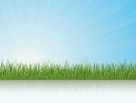 grass vector: Green Grass Under The Sunlight. Nature Vector Collection. Illustration