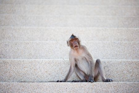 Macaque Monkey Sitting On The Steps. photo