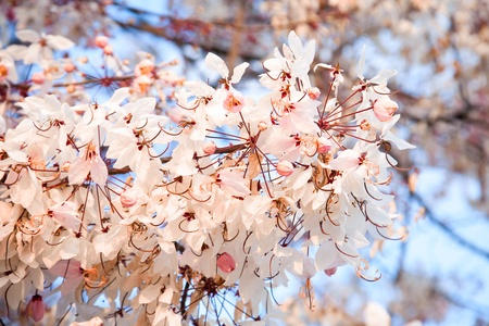 Spring flowers on the sky background Stock Photo - 9030229