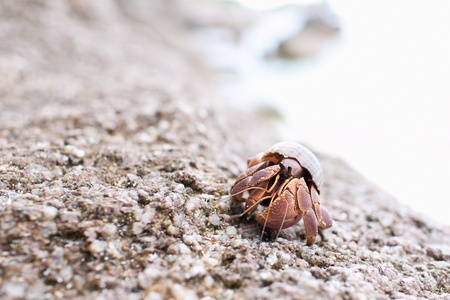 Hermit Crab Walking Along The Beach photo
