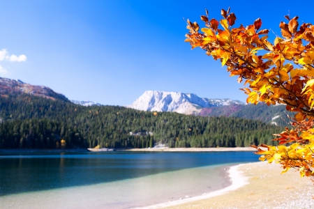 Lake with autumn tree in Durmitor National Park, Montenegro photo