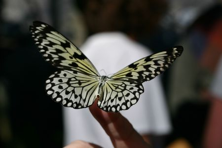 Amazing butterfly with wings open