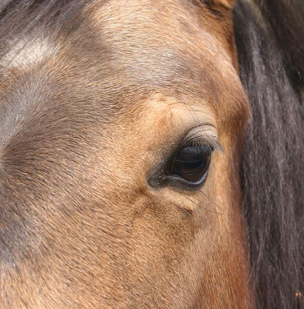 Close up of horse eye photo