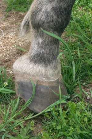 Close up of horse hoof