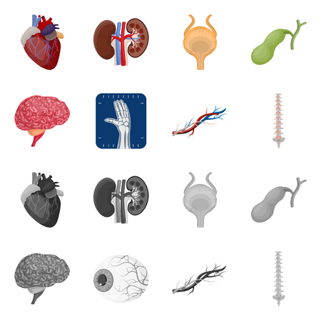 Vector design of body and human icon. Set of body and medical vector icon for stock.