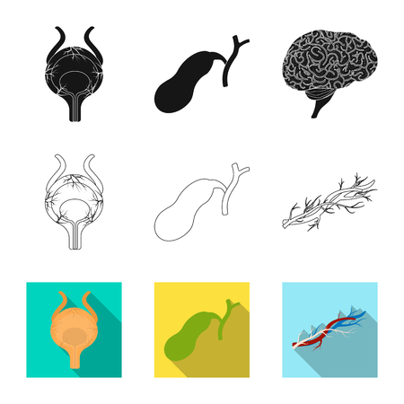 Vector illustration of body and human . Collection of body and medical vector icon for stock. Illustration