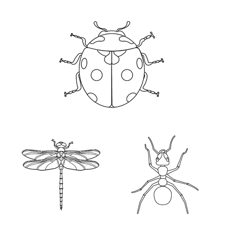 Vector design of insect and fly logo. Set of insect and element stock vector illustration. Çizim