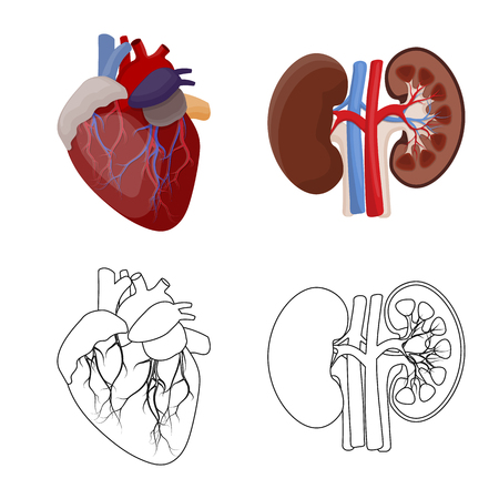 Vector illustration of body and human logo. Set of body and medical stock vector illustration. Stock Illustratie