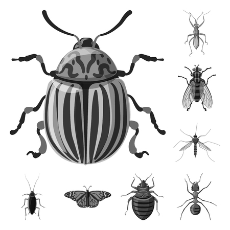 Vector design of insect and fly sign. Collection of insect and element stock vector illustration.