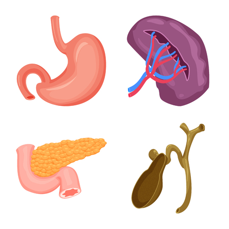 Isolated object of body and human symbol. Collection of body and medical stock symbol for web.