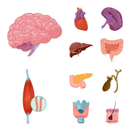 Vector illustration of body and human logo. Set of body and medical stock vector illustration. Illustration