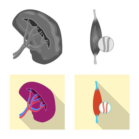 Vector illustration of body and human symbol. Collection of body and medical stock vector illustration. Illustration