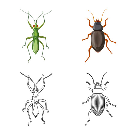 Vector illustration of insect and fly icon. Set of insect and element stock symbol for web. Stock fotó - 110331576
