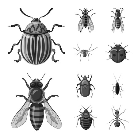 Vector illustration of insect and fly logo. Collection of insect and element vector icon for stock.