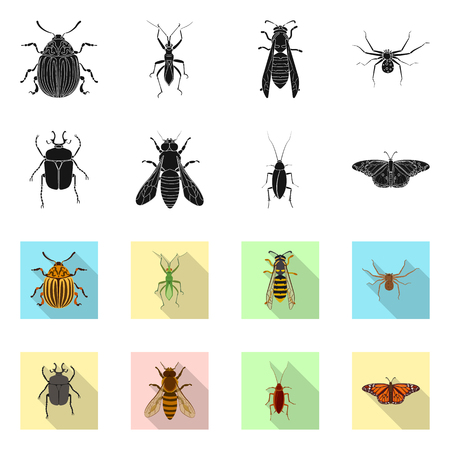 Isolated object of insect and fly icon. Collection of insect and element vector icon for stock.