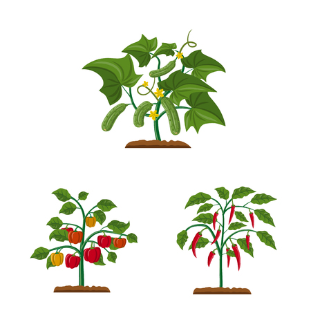Vector illustration of greenhouse and plant sign. Collection of greenhouse and garden stock symbol for web.