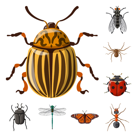 Vector illustration of insect and fly symbol. Collection of insect and element stock vector illustration.