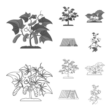 Vector illustration of greenhouse and plant logo. Collection of greenhouse and garden vector icon for stock. Illustration
