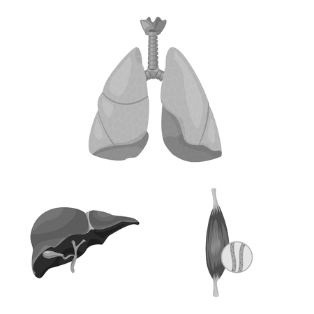 Isolated object of body and human icon. Collection of body and medical vector icon for stock.