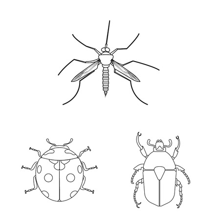 Isolated object of insect and fly symbol. Collection of insect and element stock symbol for web. Ilustração