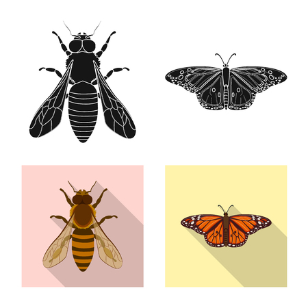 Isolated object of insect and fly sign. Set of insect and element stock symbol for web. 向量圖像