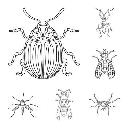 Isolated object of insect and fly symbol. Collection of insect and element vector icon for stock. Çizim
