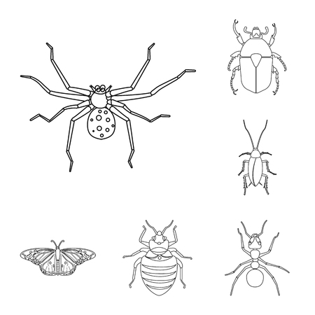 Vector illustration of insect and fly symbol. Collection of insect and element vector icon for stock. Illustration