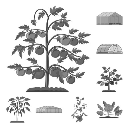 Vector design of greenhouse and plant logo. Set of greenhouse and garden vector icon for stock.
