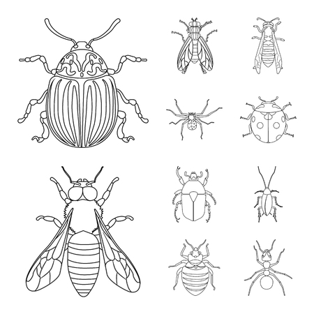 Vector illustration of insect and fly icon. Set of insect and element vector icon for stock. Çizim